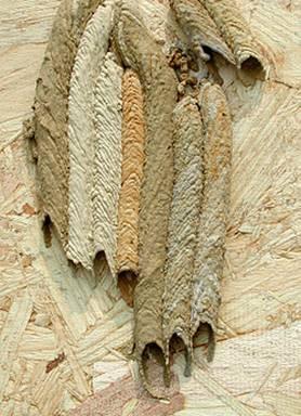 les termites wikipédia